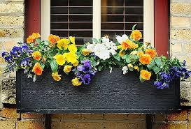What To Plant In Window Flower Boxes - window box flowers for shade