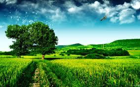green scenery picture hd desktop wallpapers 4k hd