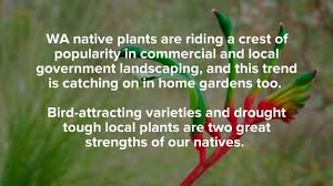 bird attracting native plants top 5 gardening trends for spring 2017 youtube