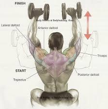 What Muscle Do Bench Press Work Ombros Sequência Completa De Exercícios Para Ombros Muscles