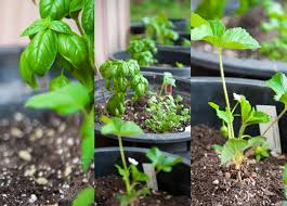 ideas container gardening for beginners ideas for container