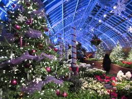 phipps conservatory winter flower show pittsburgh pa