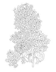 lilac flower coloring page flower colouring sheet by arttocolor