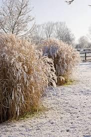 160 best garden ornamental grasses images on