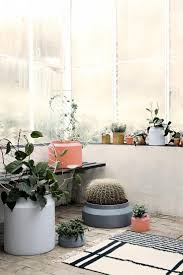 94 best indoor plants images on pinterest indoor plants plants