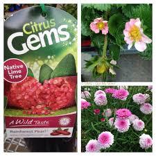 flower power garden centre terrey hills sydney