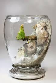 296 best terrarium u0026 aquarium images on pinterest gardening