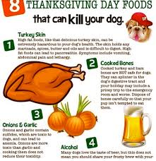 what foods can kill dogs food