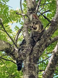 free photo stuck cat animal camouflage paw tree max pixel