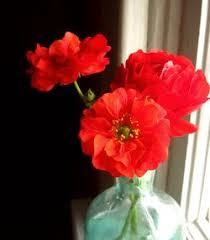 Fake Flowers My Camera My Inside A Black Apple Golly Geum