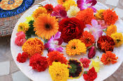 edible flowers for sale microgreens edible flowers crystallized flowers