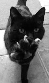please don u0027t take my claws off they are an important part of me