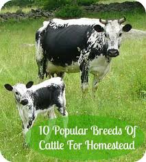 Calf Hutch Tractor Supply Best Bottle Calf Recipe For Scours Bottle Cattle And Farming