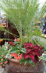 Summer Container Garden Ideas Sun Arrangement With Robellini Palm Coleus