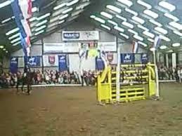 horse jumping 2 meter 6 56feet youtube