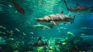 how do sharks adapt to their environment reference com