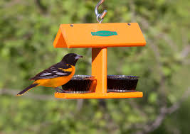 helpful tips for attracting orioles to your yard