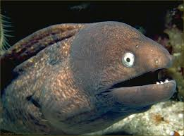 Image result for eel