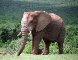 addo elephant national park wikipedia