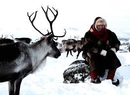 ravdol reindeer herding