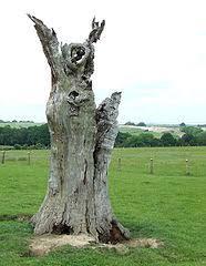 file dead oak tree linleygreen shropshire geograph org uk