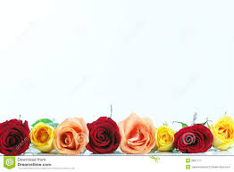 red yellow and peach color roses royalty free stock photography