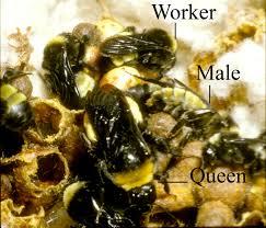 social behavior beespotter university of illinois