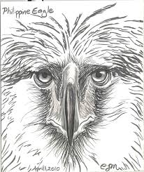jeep philippines drawing phillipine eagle clipart philippine eagle drawing pencil and in