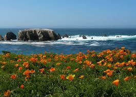 California Poppy Top 10 Locations Of California Poppy Meadows And Fields