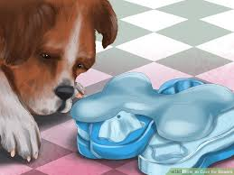 boxer dog gum problems 3 ways to care for boxers wikihow
