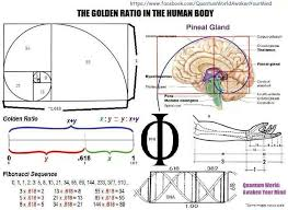 golden ratio dna spiral 488 best golden ratio phi fibonacci φ divine proportion