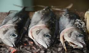 comment cuisiner le p穰isson comment cuisiner des poissons fraîchement pêchés trucs pratiques