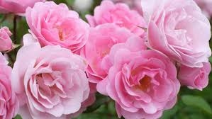 Colors That Compliment Pink What Color Complements Pink Reference Com