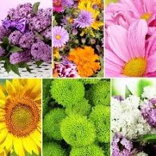 flower of the month club flowers of the month flower of the month monthly flower club