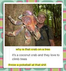 Real Life Memes - pokemon real life memes pok礬mon amino
