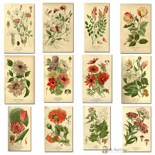 botanical calendars 2018 printable monthly calendar with vintage botanical
