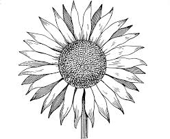 beautiful sunflower clipart images free