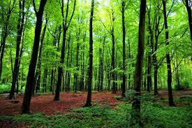 forest communication trees talk via mycelium
