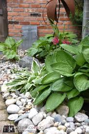 hosta garden 100 things 2 do