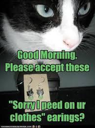 Good Morning Cat Meme - good morning ladies and gentlemen 10 pics animal s look