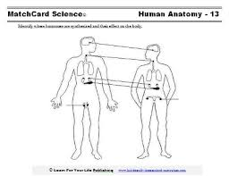 worksheets lesson plans and science projects on the human body