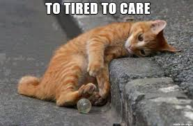Tired Cat Meme - 20 tired meme thug life meme