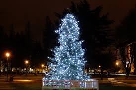 nyc christmas tree disposal christmas lights decoration