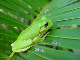 free photo frog palm frond green small free image on