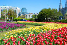 tulip festival map itinerary for tulip festival getaway to ottawa to do canada