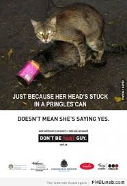 Mean Cat Memes - 20 doesn t mean she s saying yes cat meme pmslweb