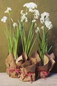 beautiful paperwhites christmas garden ideas creative maxx ideas
