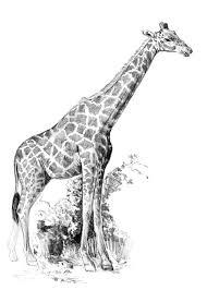 mini sketching made easy giraffe 062585 details rainbow