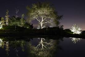 Landscape Tree Lights Moon Lighting Lighting Distinctions Creative Lighting