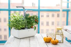 the véritable indoor garden lets you grow herbs and vegetables
